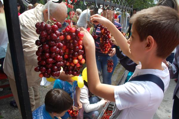 cherry festival kyustendil