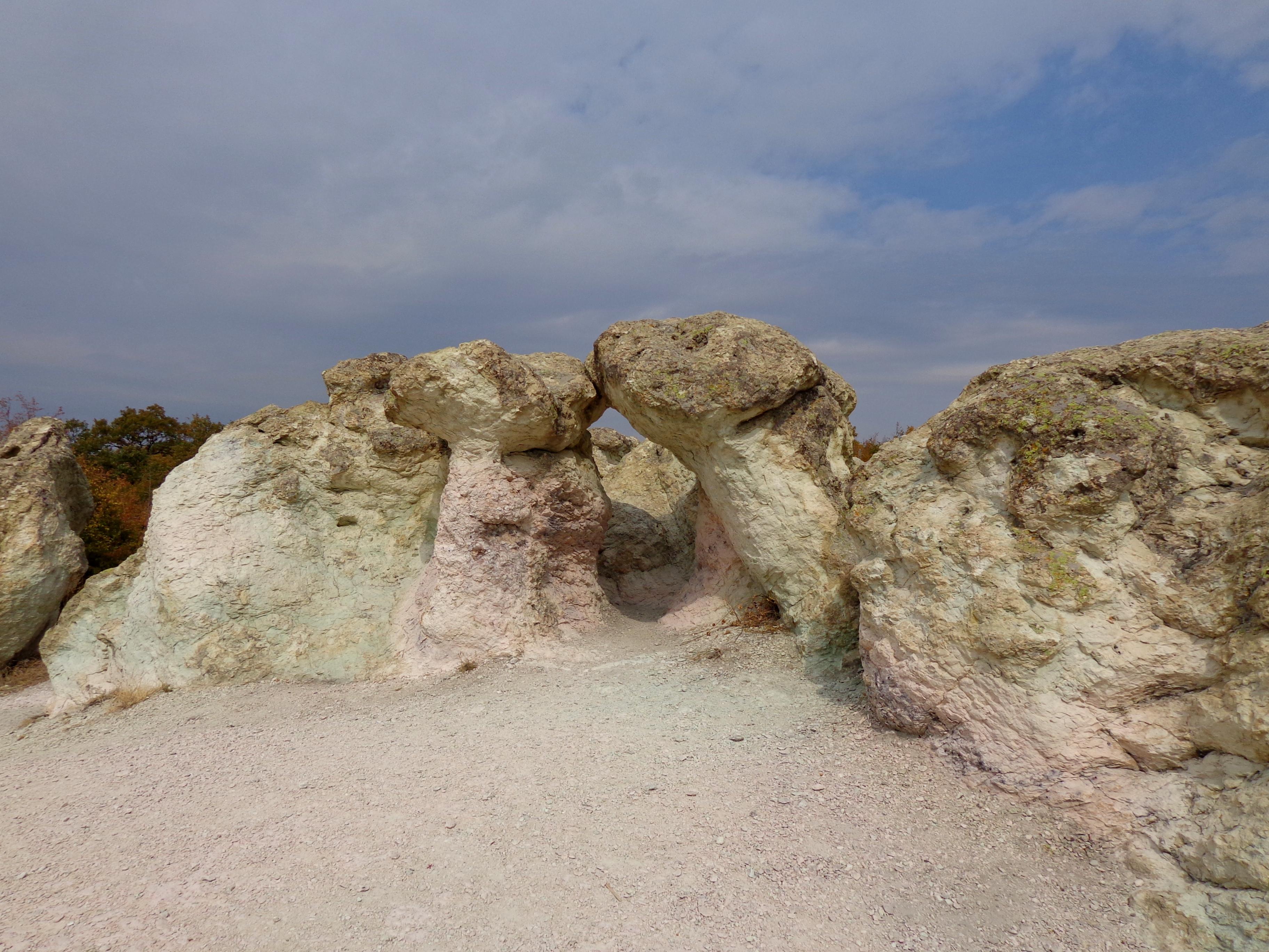 stone mushrooms beli plast