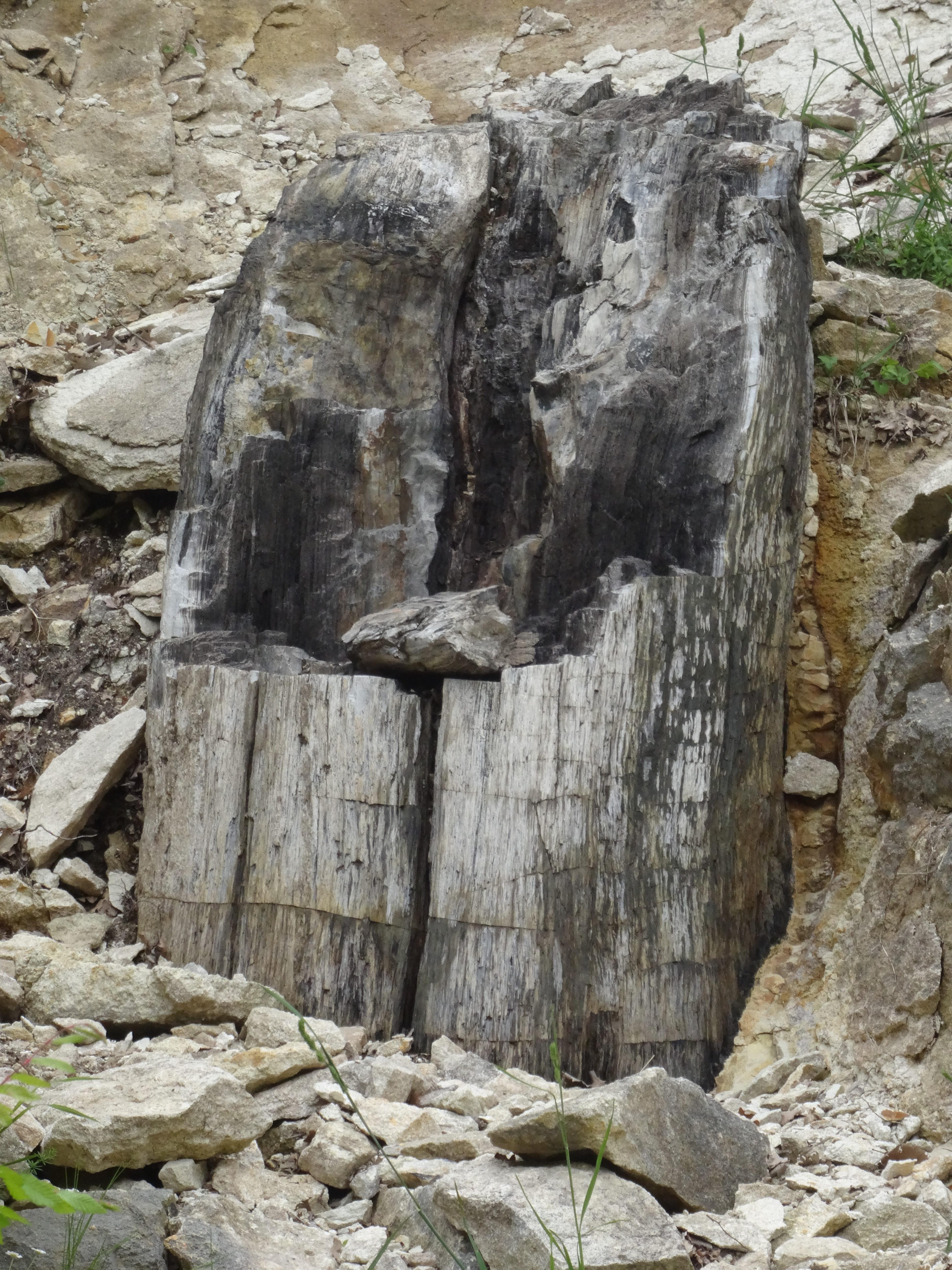 Petrified forest unique