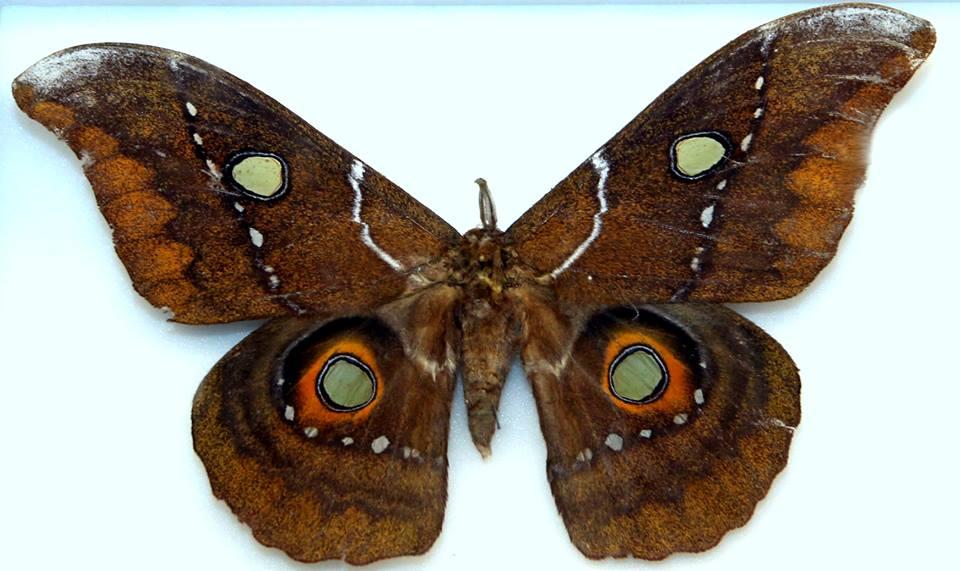 Exhibition butterflies Plovdiv