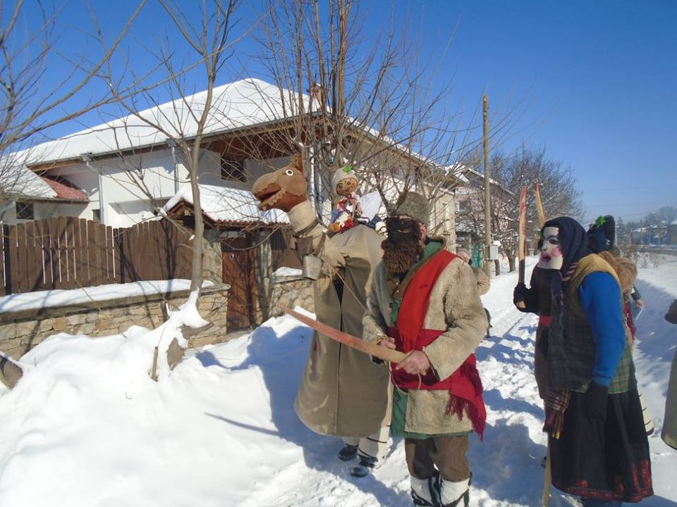 yoglav camel
