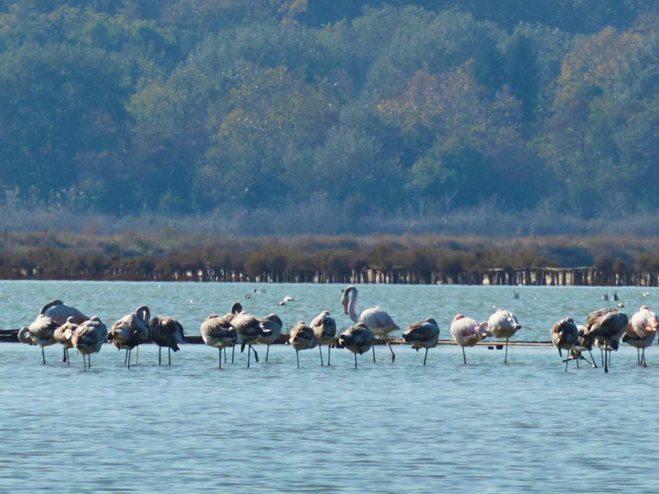 Atanasovsko lake