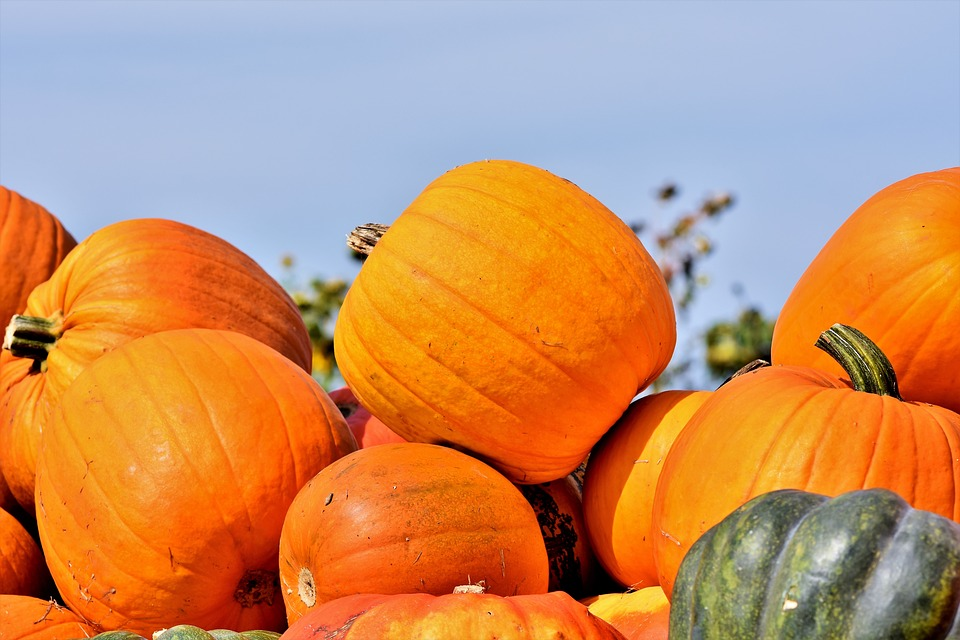 pumpkin fest Sevlievo