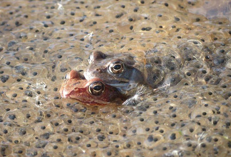 frogs Muhalntsa